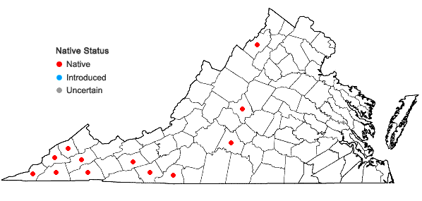 Locations ofArundinaria gigantea (Walt.) Muhl. in Virginia