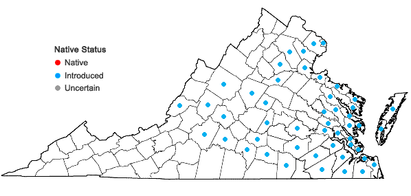 Locations ofPhragmites australis (Cav.) Trin. ex Steud. ssp. australis in Virginia